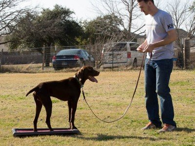 Dog School Raymondville Texas Dog Training Expert