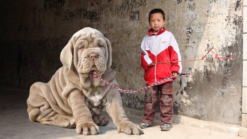 Best Kid-Friendly Dog Breeds