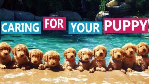 Puppy Socialization Plan