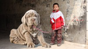 Top 10 Most Kid-Friendly Dog Breeds