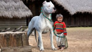 10 Bad Dog Breeds for Families with Kids