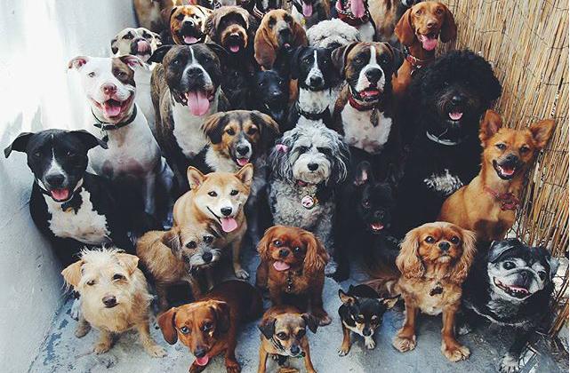 dog training texas