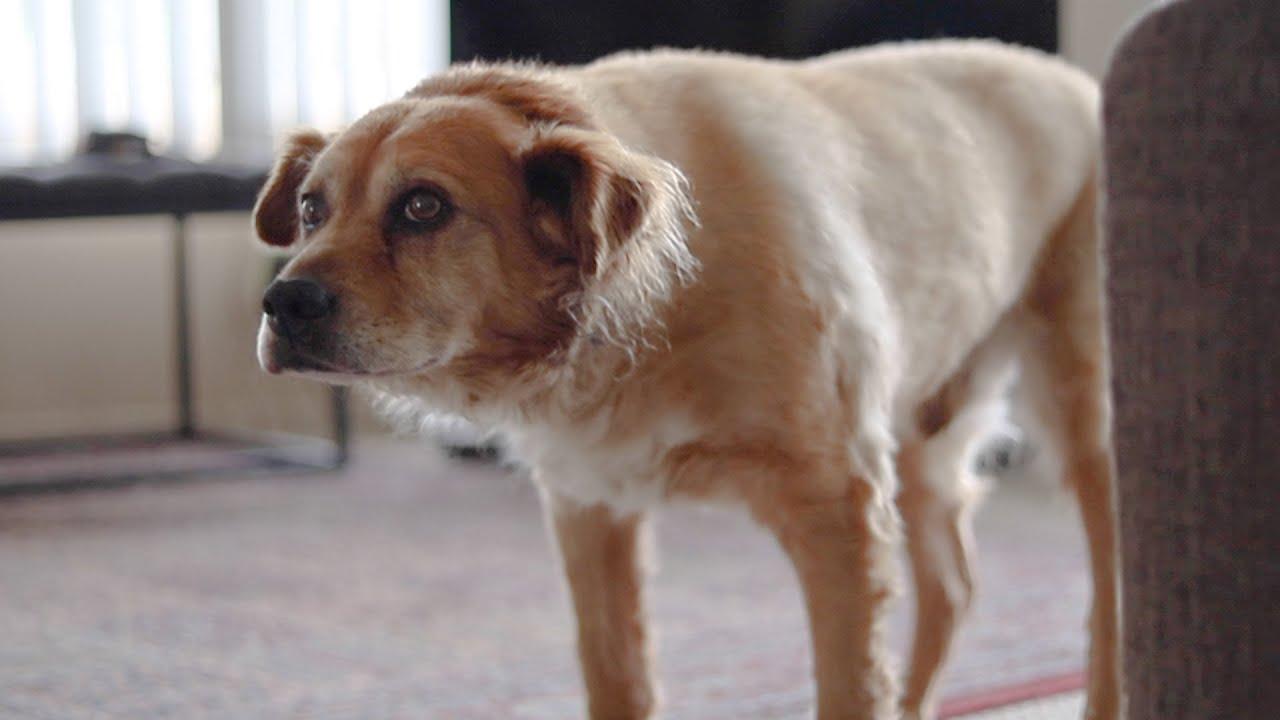 Dog Arthritis Care
