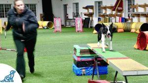 Dog Agility Training — The Sport Dogs Love