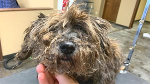 Complete Guide to Grooming Your Dog