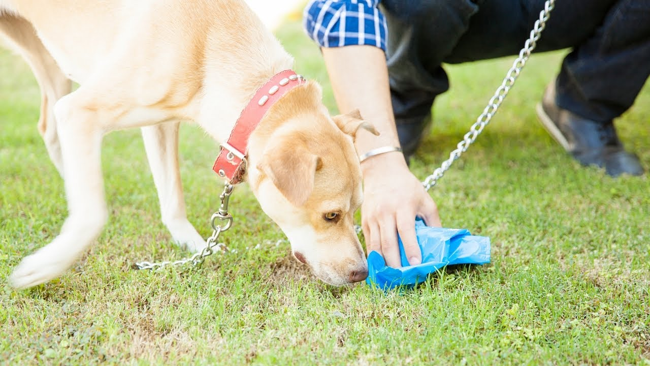 How To Make A Dog Stop Eating Poop