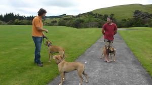Positive Dog Training: A Great Method of Dog Obedience Training