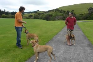 Positive Dog obedience Training