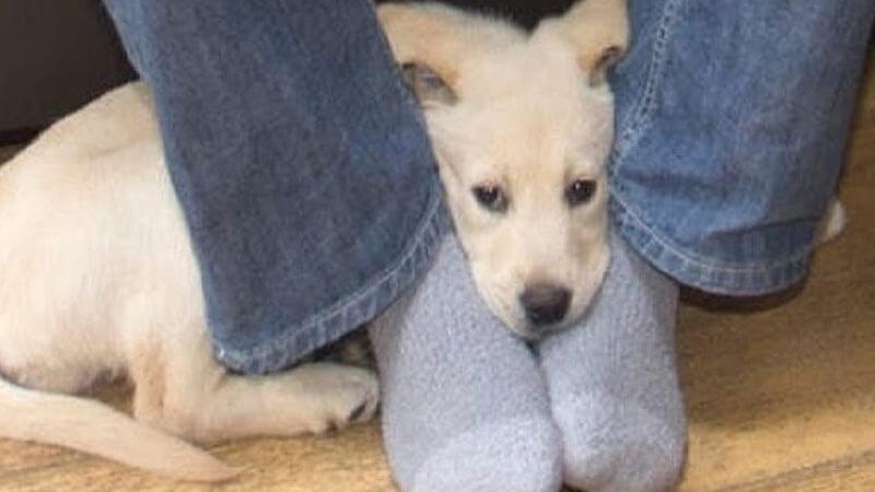 Dog Sits on my Feet
