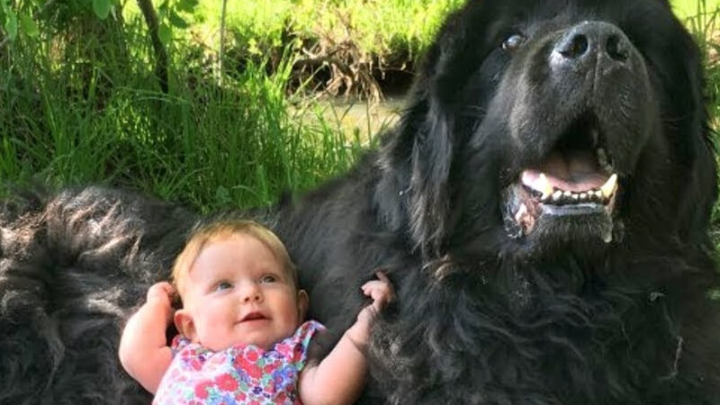dog plays too rough with kids