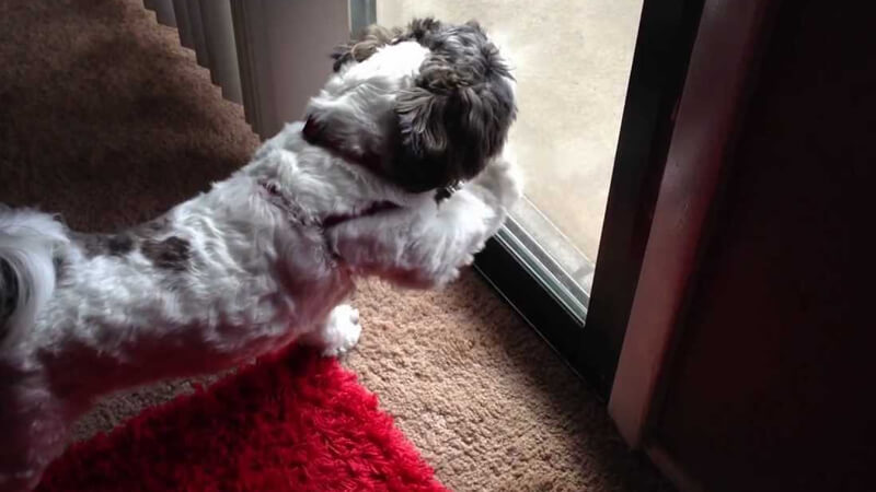 how to get dogs to stop scratching doors