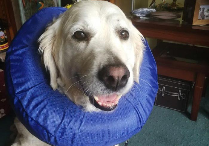 Best Inflatable Dog Collar Reviews
